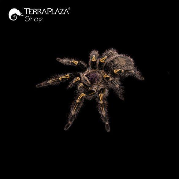 Grammostola pulchripes madárpók black férfi póló