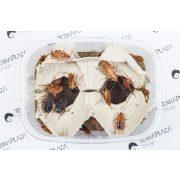 Orosz csótány, Csoki csótány (Blatta lateralis) syn: (Shelfordella tartara) Nagy, 1,8-2,5 cm