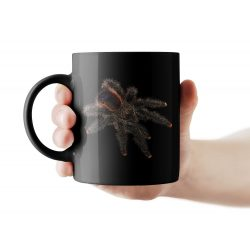 Avicularia sp. fekete bögre